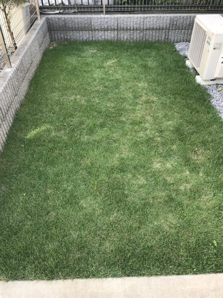 芝刈り前の庭全体像。