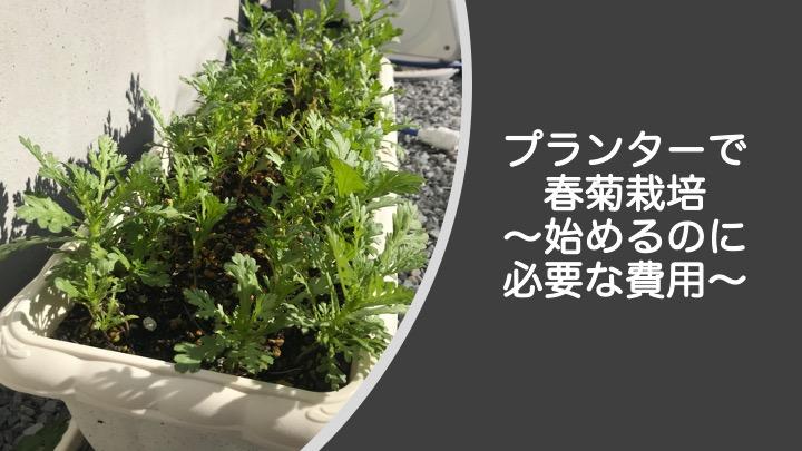 春菊のプランター栽培に必要な費用