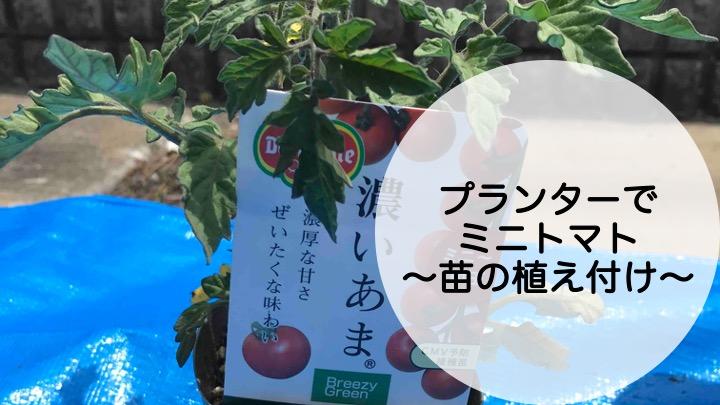 プランターでミニトマト、苗の植え付け